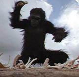 2001_ape.jpg